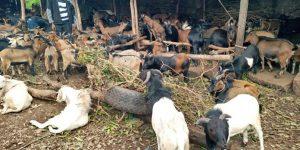 Fête de Tabaski : un mouton se négocie entre 700 à 1 million 500 mille francs guinéens à Labé