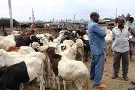 Tabaski 2021 en Guinée: Des fidèles musulmans peignent à trouver de moutons!